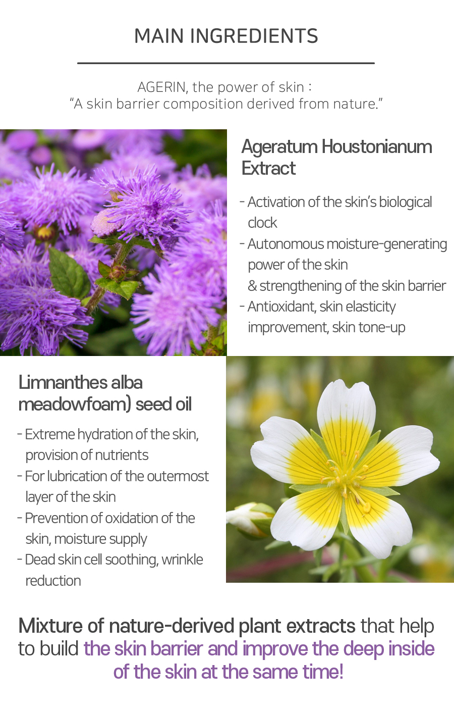 """Main Ingredient : AGERIN, the power of skin: """"A skin barrier composition derived from nature."""" 1. Ageratum Houstonianum Extract - Activation of the skin's biological clock   2. Limnanthes alba (meadowfoam) seed oil - Extreme hydration of the skin, provision of nutrients"""